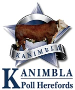 Kanimbla Poll Herefords